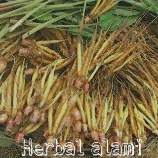 Obat Kuat Herbal Untuk Kebutuhan Pria Dewasa Nambah Tahan Lama di Ranjang | Munchord dan Zinc Capsul: Ramuan Herbal Alami Untuk Mengatasi Impotensi Aman Dan Ampuh