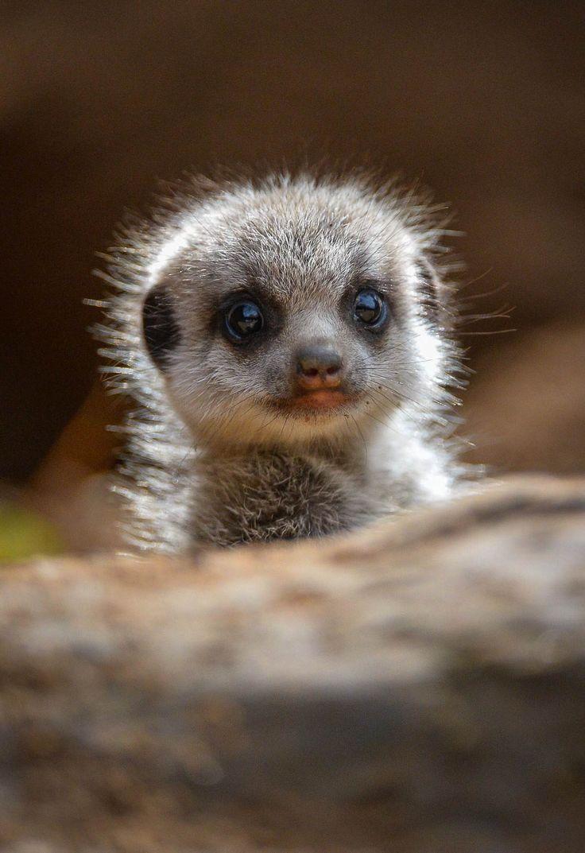 Small Animal Reptiles And Amphibian Habitats: Best 25+ Baby Sheep Ideas On Pinterest