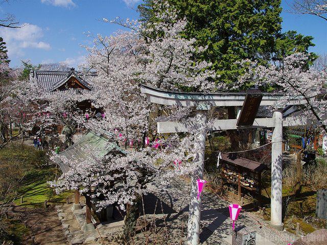 小諸城址懐古園 (Komoro Castle Site in spring)
