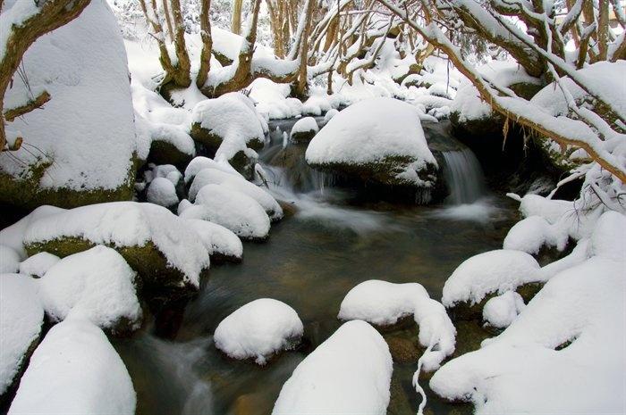 Fresh Snowfall, Merritts Creek, Thredbo