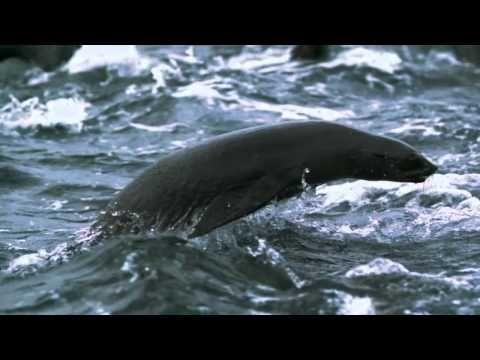 Best of BBC Planet Earth HD [ Kamil Bartolewski - Morning Sun ]