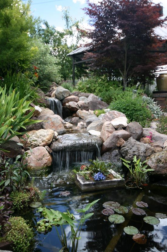 backyard ponds | Landscaping: Backyard Pond and Waterfall with Arched Bridge