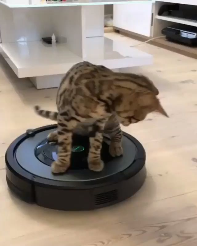 Lustiges Katzenspielen   – Kreative ideen