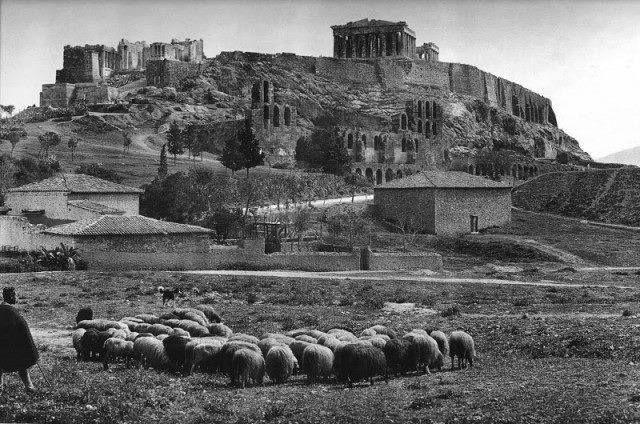 sheeps around Acropolis, 1903