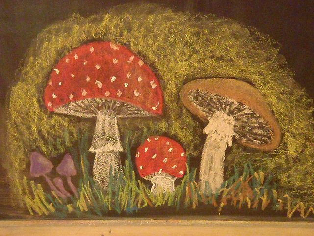 Waldorf ~ 5th grade ~ Botany ~ Mushrooms ~ chalkboard drawing