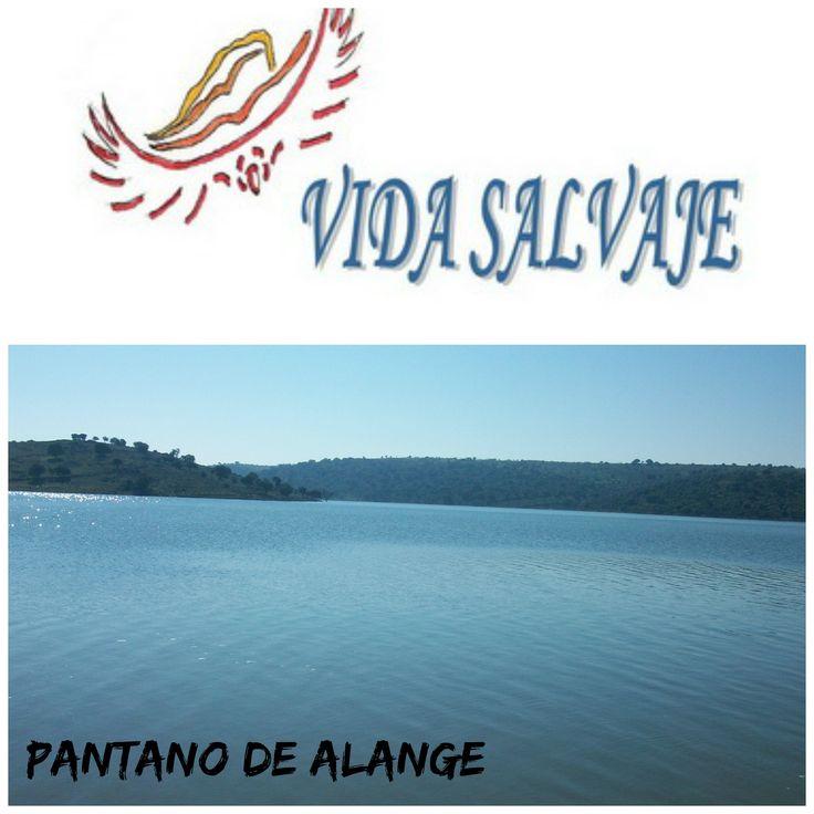 Pantano de #Alange #Badajoz #Extremadura  http://www.vidasalvaje.net/