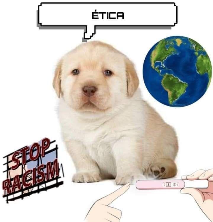 Pin De Valen S En Perritos Memes Perros Memes Divertidos Memes