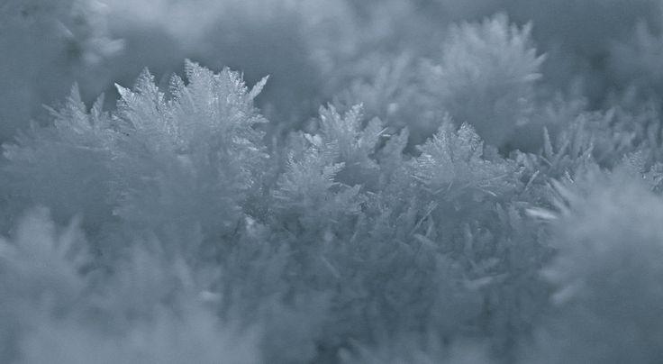 Snowcrystals Finnmark, Norway Photo: Elisabeth Johnsen
