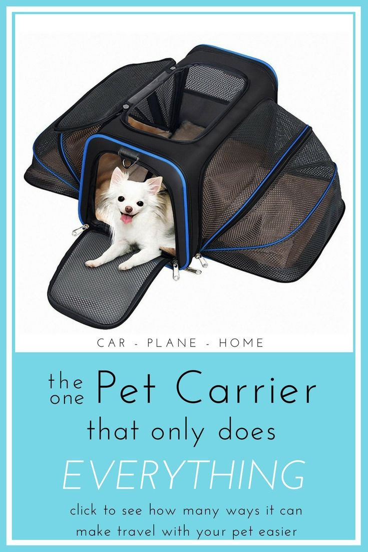 best dog products images on pinterest