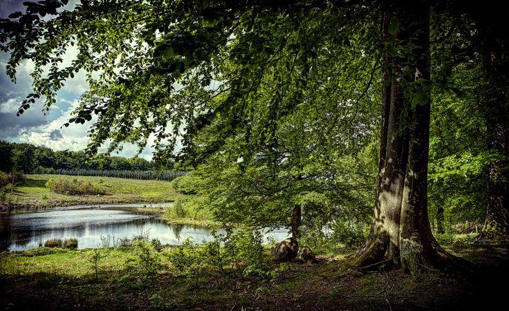 Beech and lake - Svanninge Bjerge - southwest Funen, Denmark...   Flickr - Photo Sharing!