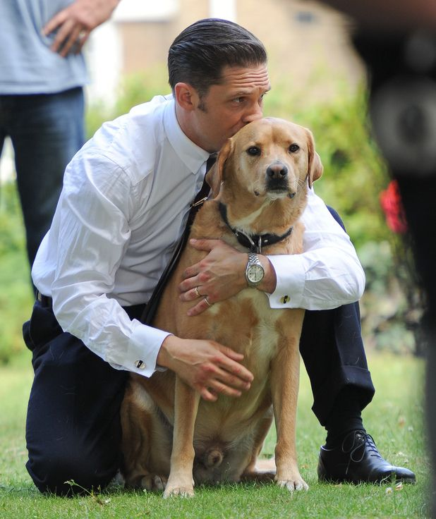 Tom Hardy and his pet labrador Date of Picture: 07/15/2014 See the set: SPL802118 Usage: World Rights Caption: Tom Hardy and his pet labrador off set while filming Legend in East London