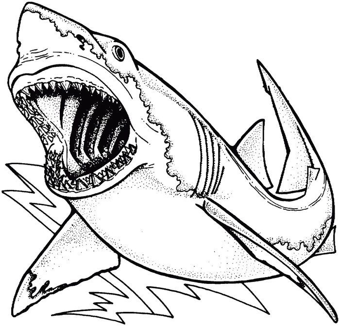 Megalodon Shark Coloring Pages In 2020 Shark Coloring Pages Animal Coloring Pages Coloring Pages