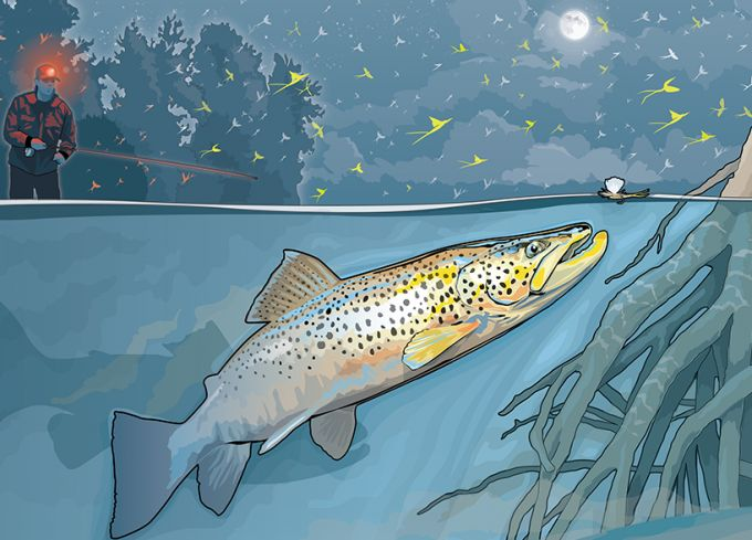 how to catch big brown trout in lakes