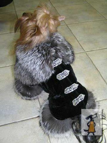 Одежда для собак - Google Search