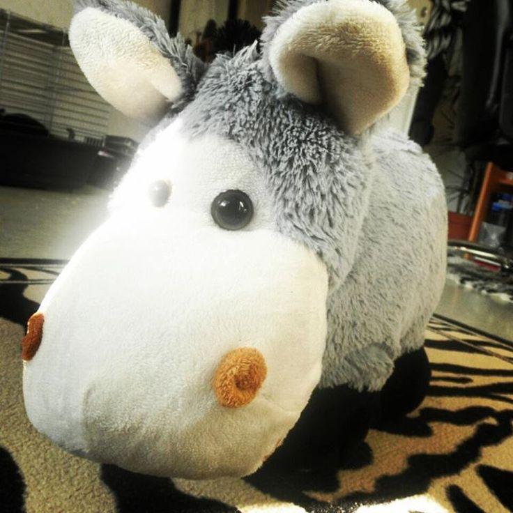 "Here's my #plushie #donkey, I named him ""Onion"" :) - #Plushies #Cute #Cuteness #animals #plushieanimals #misc #b #stuff #myhome #home #donkeys #toy #toys #homesweethome #random #randomness #ohfudge"