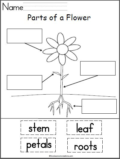 Parts of a Flower | Preschool Ideas | Parts of a flower ...