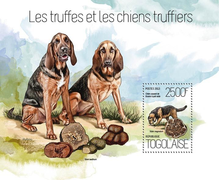 TG 13821 b – Mushrooms and Dogs, (Bosnian Coarse-haired Hound, Tuber magnatum).