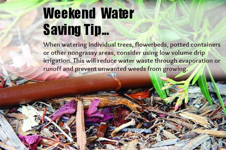 Landscape Watering Tip: When watering individual trees, flowerbeds, potted containers or other non-grassy areas, consider using low volume drip irrigation. This will reduce water waste through evaporation or runoff and prevent unwanted weeds from growing. #sprinkler #landscape #irrigation #valve #timer #lawn #plant #grass #garden #yard #backyard #water #diy #rainbird (via http://store.rainbird.com)