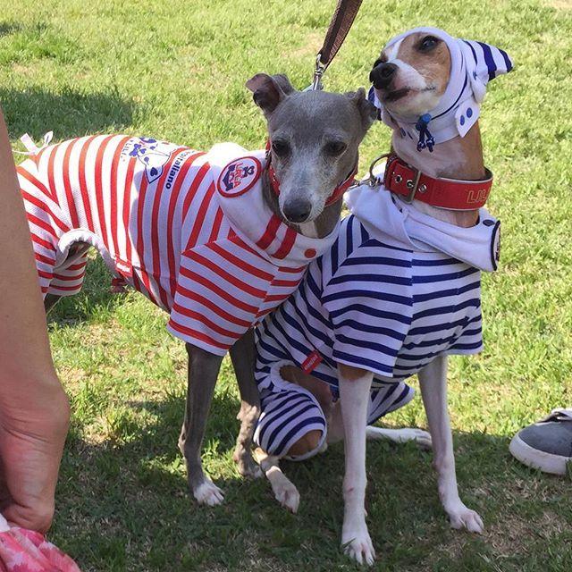 dogjet☆ららりり♪ 海おさでは、沢山のお客様のご来店に感謝します♪海おさスタッフ様☆素敵なイベントの開催に、感謝します♪ありがとうございました☆♪ #うみおさ #海おさ #umiosa#italiangreyhound#whippet#Piccololevrieroitaliano#dogjet #犬服#shop#イタグレ#ミニピン#イタリアングレーハウンド#UVカット#日光アレルギー #帽子#モンチーハット