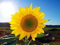 Conservación de los recursos renovables y no renovables del Planeta, de los seres vivos que habitamos en este sistema Solar.  por Lugercareli