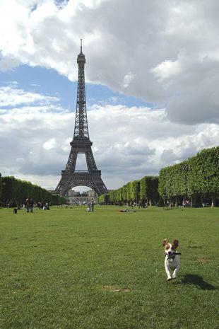<パリのエッフェル塔の見所> シャンドマルス公園でピクニックをすることも出来る。
