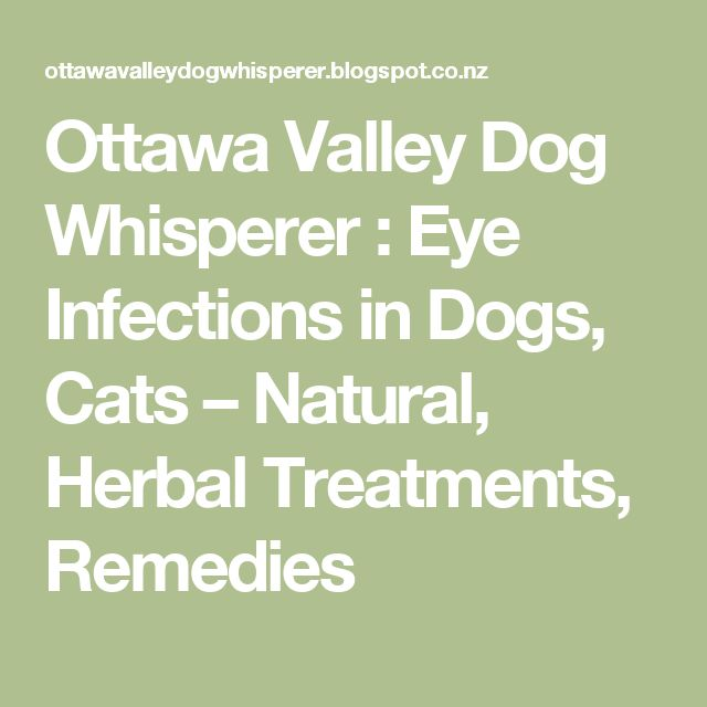 Dry Eye Treatment Natural Remedies For Dogs