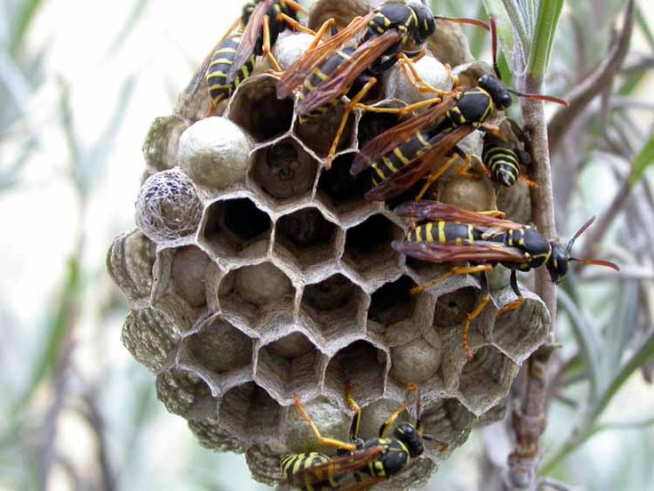 Get A Free Quote Online For Toronto Wasp Nest Removal
