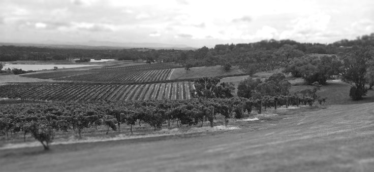 Beautiful views when visiting wineries!  Buying wine at the cellar door is one of the best ways to purchase wine.  This is the view from Audrey Wilkinson's in Hunter Valley.  (From Wine Sense, Chapter 17: Buying and Storing Wine)