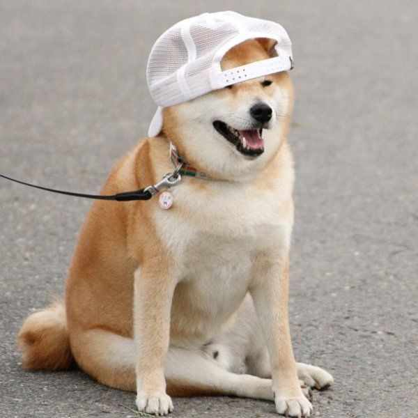 most funny pic of dog wearing hats
