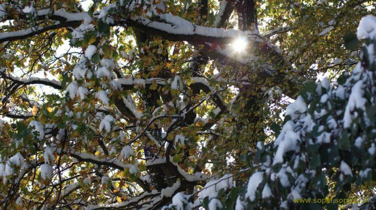zima jesienią