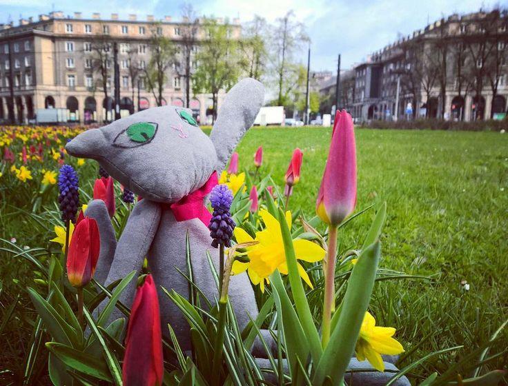 Mrau Nowa Huta taka piękna! #encek #kotekwlodek #wiosna #placcentralny #spring #cat #flowers #nowahuta #nh