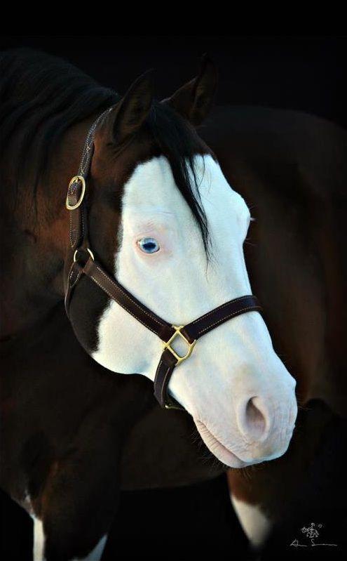 PRETTY BLUE EYES Colonels Lone Gun #Equestrian