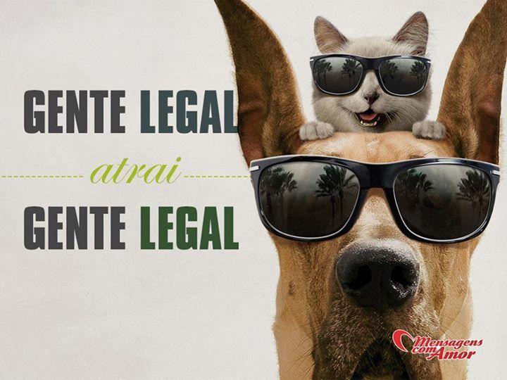 Gente legal atrai gente legal! #amizade #animais #mensagenscomamor