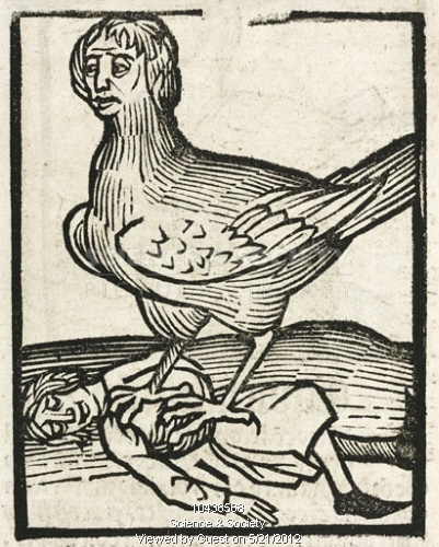 The Harpy, 1497. Woodcut of a winged harpy and her prey. In Greek mythology, these were creatures with women's heads and sharp claws. Illustration from 'Hortus Sanitatis', ('Garden of Health'), printed by Johann Pruss in Strasbourg in 1497.
