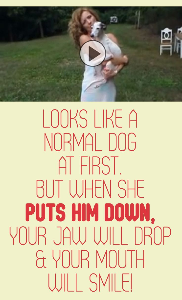 Looks like a normal dog at first... but when she puts him down, your jaw will drop & your mouth will smile!