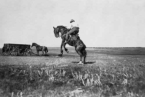 "Cowboy riding a bucking bronco on Billy Cochrane's ""CC"" ranch, Mosquito Creek, Alberta. Date: 1901"