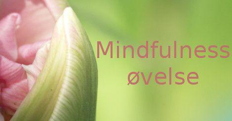 Guidet mindfulness øvelse i at bruge 10 min i haven, hvor du giver dig selv lov til bare at blive et med nuet. Du grounder og finder indre ro og får fred i dit tankemylder for en stund.