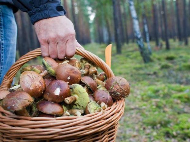 """Как выглядят ядовитые грибы """"маскирующиеся"""" под съедобные https://joinfo.ua/health/1216075_Kak-viglyadyat-yadovitie-gribi-maskiruyuschiesya.html"""
