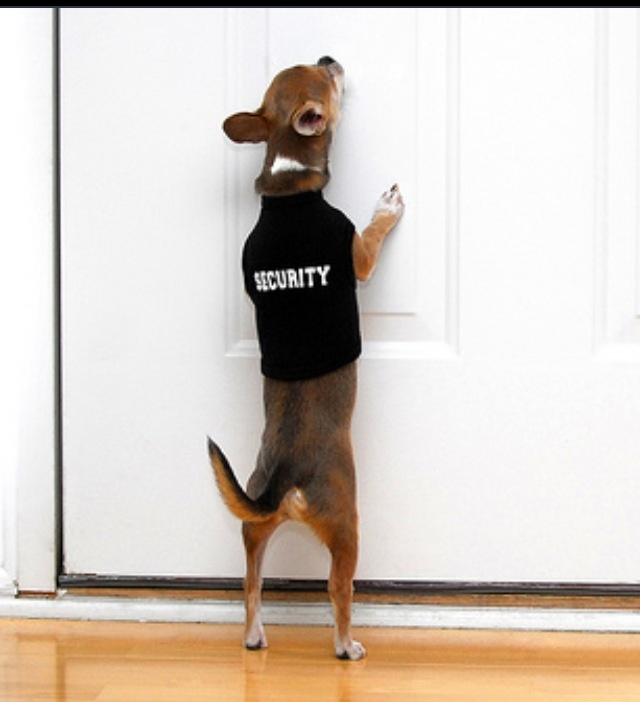 Chihuahua Security. Lol: