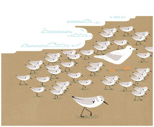 littlechien:    littlechien via lustik  lustik:    Sanderlings - Doug Ross via bikarlan