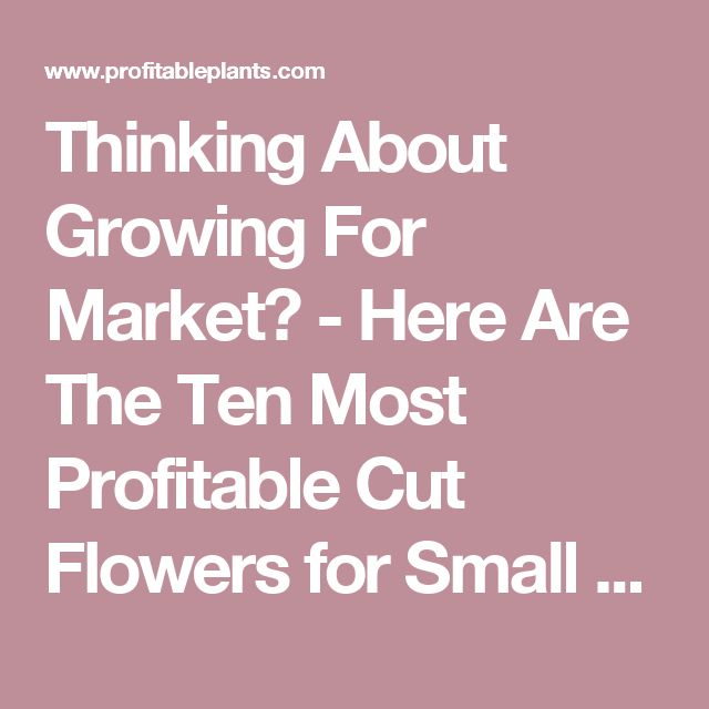 Thinking About Growing For Market? - Here Are The Ten Most Profitable Cut Flowers for Small Growers - Profitable Plants