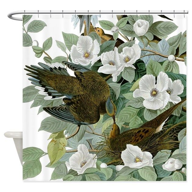 The Turtle Dove, also called the Mourning Dove, was called the Carolina Pigeon by John James Audubon in his early 1800s Birds of America book.