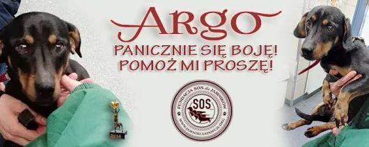 Argo - poniewierka, bicie, głód. Pomożcie odmienić jego los.