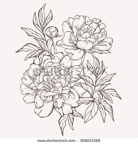 Vector peony flower isolated on white background. Element for design. Hand-drawn contour lines and strokes.