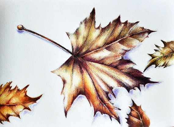 Original Colored Pencil Drawing, Botanical Leaves Drawing, Autumn Leaf Art, Realistic Drawing  5.5x8 inch