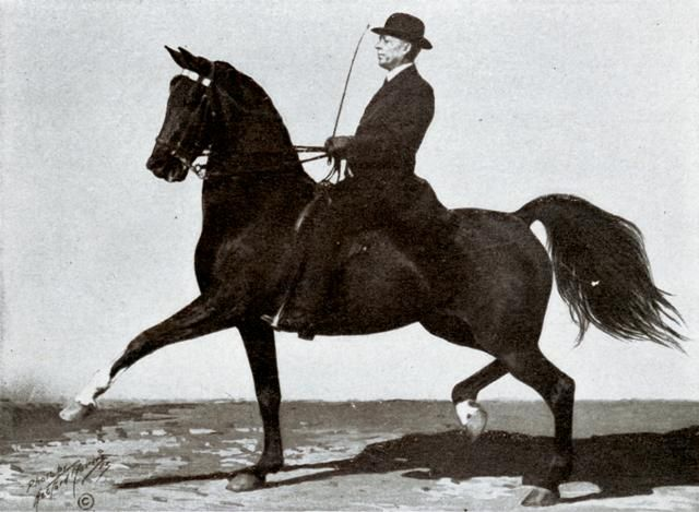 bass black horse trainer - Google Search
