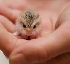 Resultado de imagen para jaulas hamster ruso