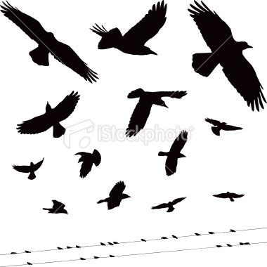 1000 images about crows and ravens on pinterest - Vorlage vogel ...