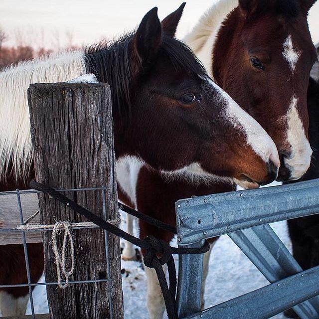Incredible Horses