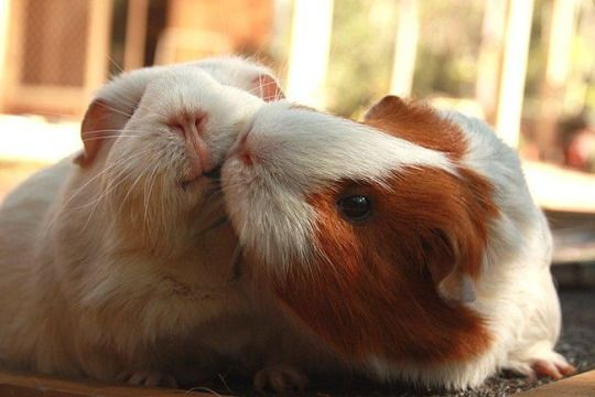 Piggy kisses!!! AWWW... But she look like she ain't having it... What did you do man...?